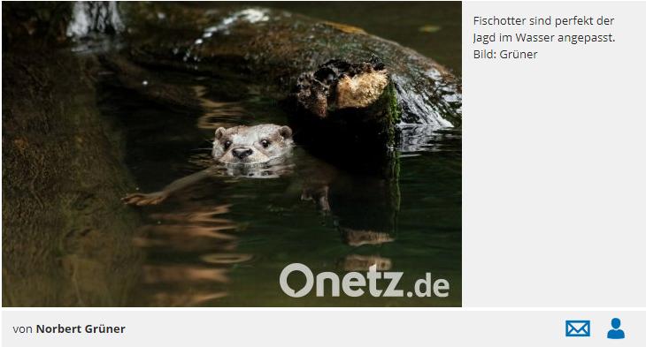 Wo Wasser ist, ist auch der Otter